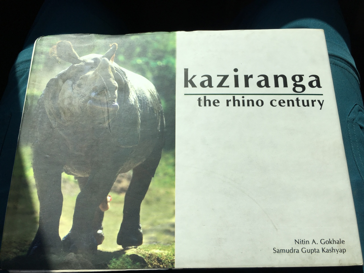 Kaziranga Park with Rhinos